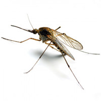 Mosquito Wall Spray Powder 80g